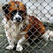 dog welfare 110x110 - Clearing the Air: Common Misconceptions about Dog Shelters