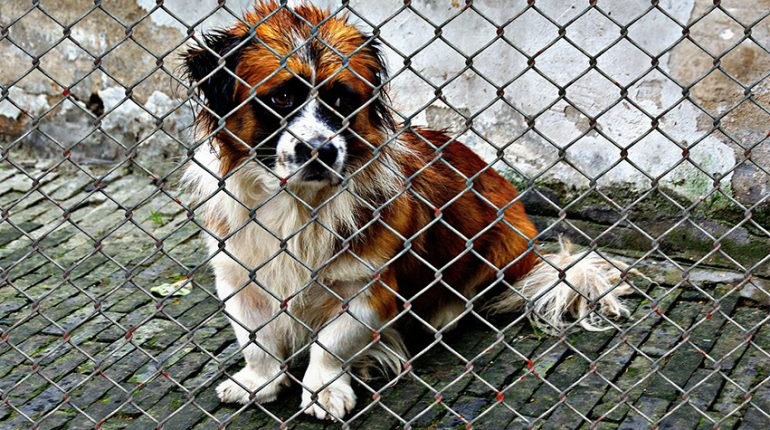 dog welfare 770x430 - Clearing the Air: Common Misconceptions about Dog Shelters