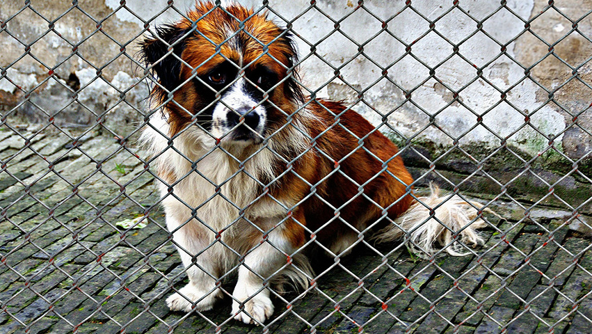 dog welfare - Clearing the Air: Common Misconceptions about Dog Shelters